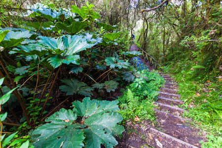 Earthen path with wooden steps that runs through a native Andean forest Stock Photo