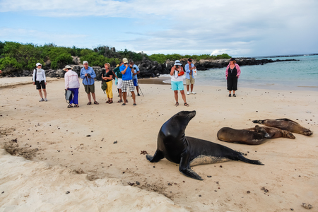 Isla Lobos, Galapagos, Ecuador, January 5, 2012: Group of unidentified tourists watching a group of sea lions on the beach of Galapagos