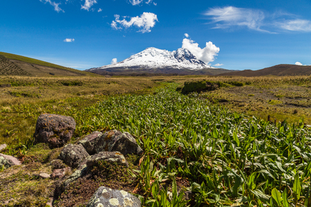 Vegetation in a wetland in the paramos of the Antisana volcano, Andes Ecuador