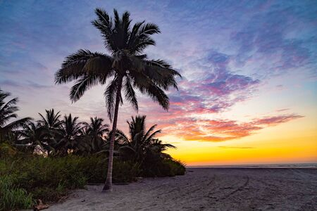 Silhouette of palm trees with beautiful sunset with clouds of various colors on the dark beach Фото со стока