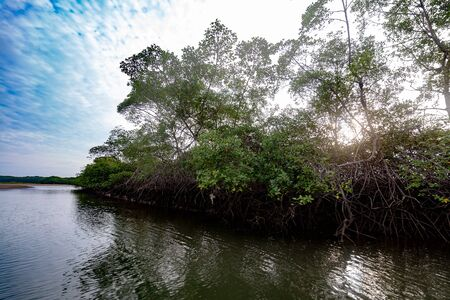 Salt water channels and mangrove trees with their green leaves as the afternoon approaches