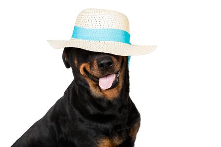 Happy dog wearing a floppy hat isolated on white background Stock Photo