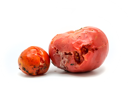 insides: Two rotten tomatoes isolated on white