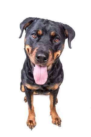 Happy curious dog isolated on white background