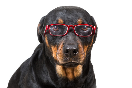 Disappointed dog looking through glasses isolated on white background