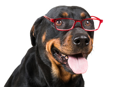 Happy dog looking through glasses isolated on white background