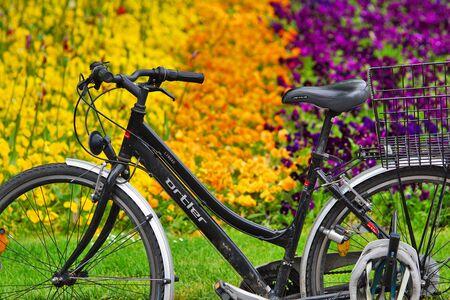 Bicycle in front of flower splendor Banco de Imagens