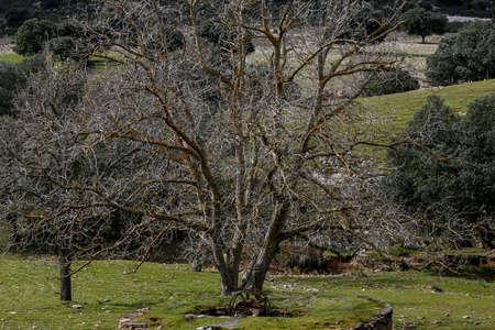 Landscape of the Montes de Toledo in Castilla La Mancha, Spain.