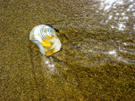Shell submerged on the shore of the beach, in Marbella, Andalucia, Spain.