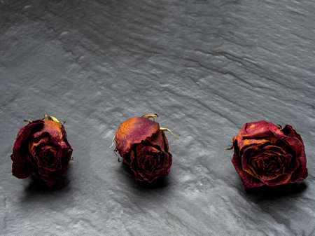 Dried and withered red rose.