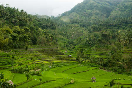 Balinese landscape with terraced rice paddies photo