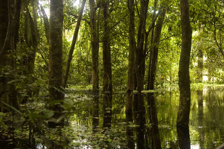 Afternoon sun shining into an AMAZON RAINFOREST swamp photo