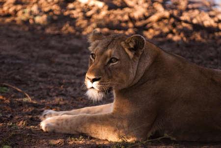 Kapama Game Reserve, Hoedspruit, South Africa photo