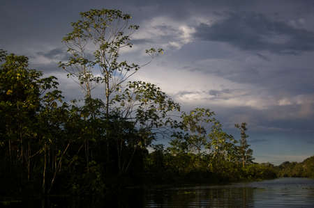 Stormy skies over the trees in the Amazon Rainforest photo
