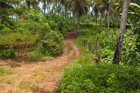 Road to Playa Rincon in the Dominican Republic photo