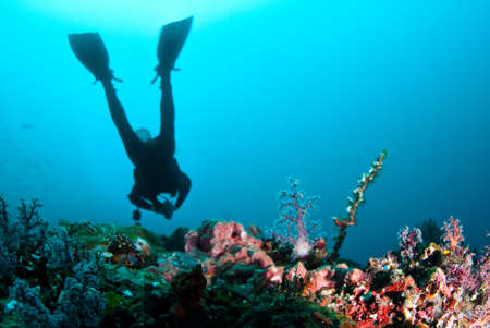 Scuba diver swimmming over reef photo