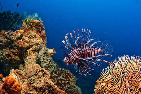 Underwater coral, fish, and plants Bali, Indonesia Stock Photo