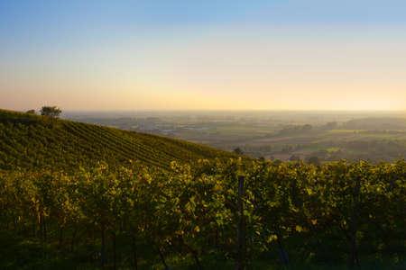 View over wine fields in the German countryside photo