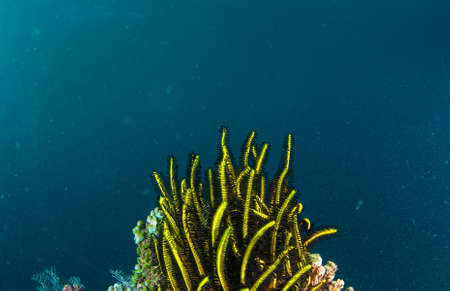 Underwater coral, fish, and plants Bali, Indonesia Stock Photo - 16343804