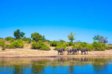 Gruppe von Elefanten zu Fuß entlang eines Flusses