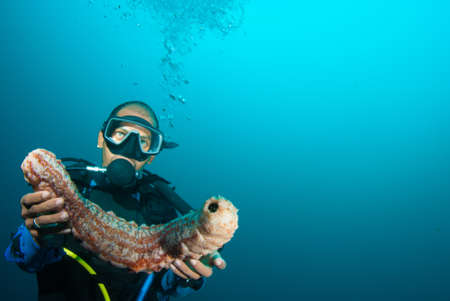 Scuba diver holding up a sea cucumber (Holothuroidea) photo