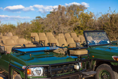 Open-topped safari vehicles ready for a game drive