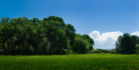 Blue sky, lush green field, and forest photo