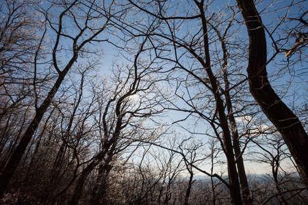 blue ridge: Forest in the Blue Ridge mountains, Georgia