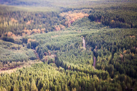 tilt: Forest in rural Washington with logging road, tilt shift effect