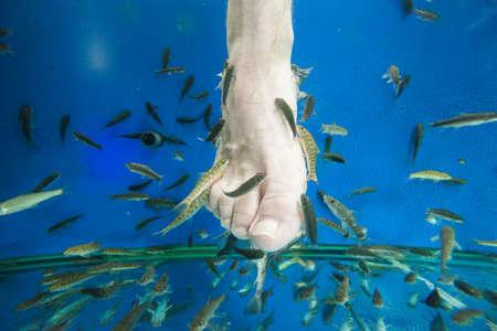 """Toeristen genieten van een """"vismassage"""" (pedicure) in Zuidoost-Azië Stockfoto - 88937441"""