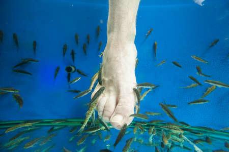 Tourists enjoy a fish massage (pedicure) in southeast Asia