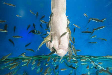 kangal: Tourists enjoy a fish massage (pedicure) in southeast Asia