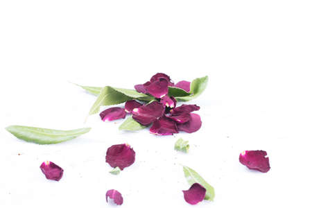 Old dried red roses isolated against a white background