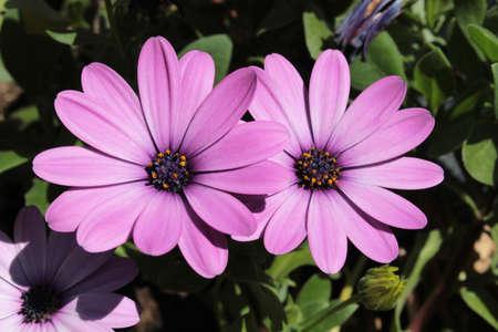 Flowers in the garden, purple