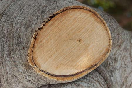 Old tree billet wood
