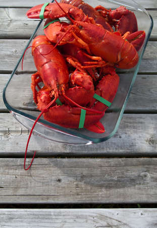 lobster: Lobster freshly cooked ready to eat