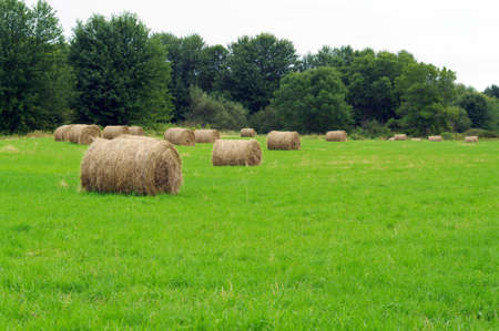 recently: Recently baled hay in the field  Stock Photo