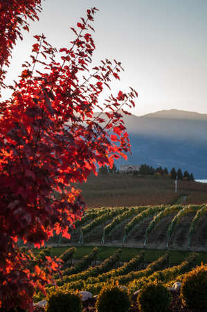 food state: View from Benson Vineyard with the fall colours