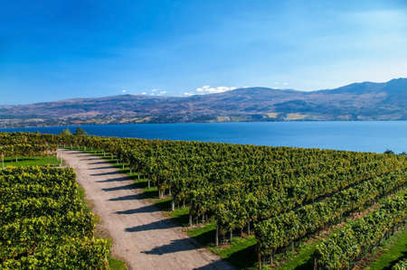 View from Mission Hill Winery of Lake Okanagan and the mountians Stok Fotoğraf