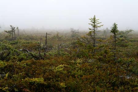 bird sanctuary: Fog on the bog on Grand Manan Bird Sanctuary
