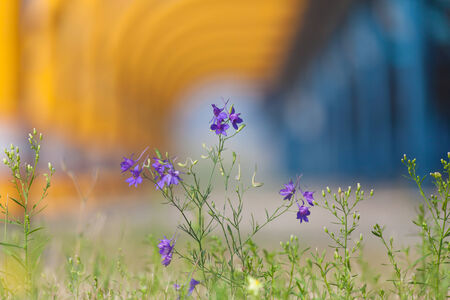 Flowers on industrial background photo