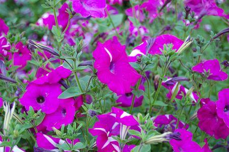 flowerses on flowerbed Stock Photo