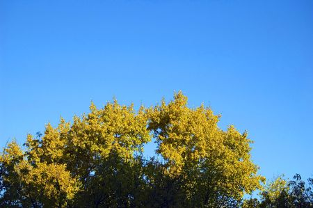 wasatch: autumn leaves on sky background