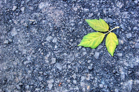 cementum: autumn leaves background