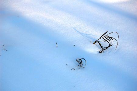 stalk of the herb fallen asleep by snow