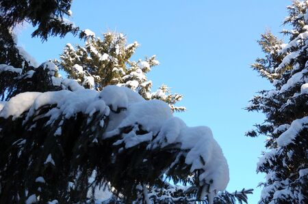 branches ated, fallen asleep by snow on background blue sky photo