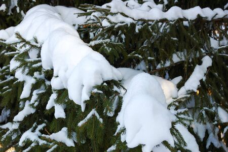 branches ated fallen asleep snow, close-up photo