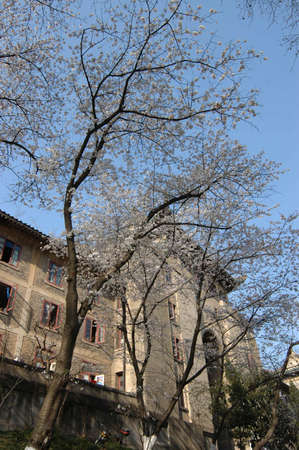 Wuhan University Hubei China Ministry of Education of the People Editöryel