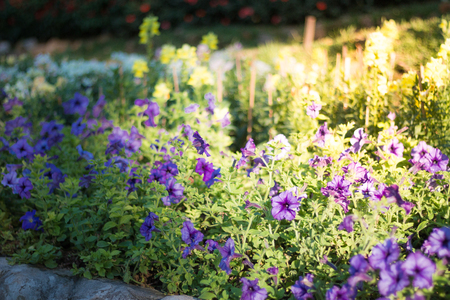 Beautiful flowers in the garden, background photos, nature photos