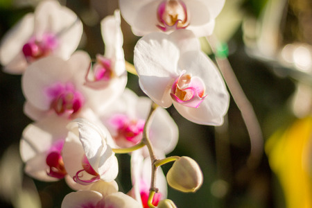Beautiful orchid in the garden, background photos, nature photos Imagens
